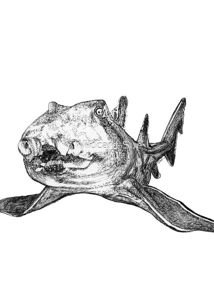 Gracie the Port Jackson Shark by Wildcard-Sue