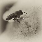 Bee in flight sepia macro near flower  by Jason Franklin
