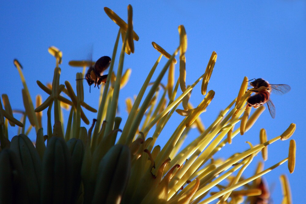 Busy Bee by nancyt59