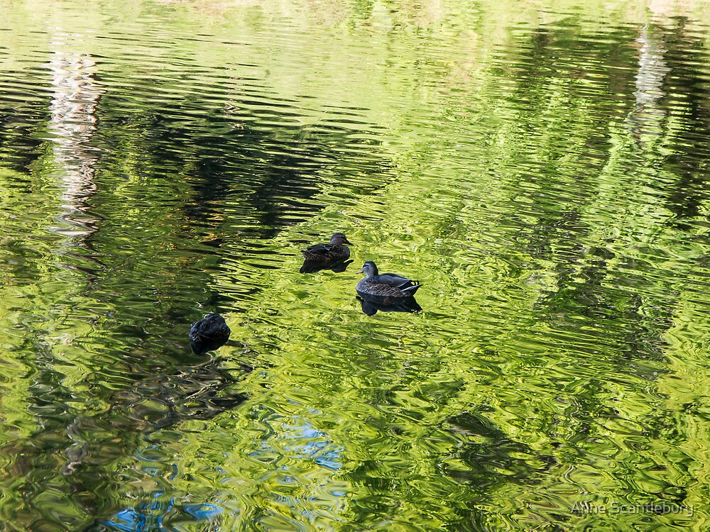 ducks on the water by Anne Scantlebury
