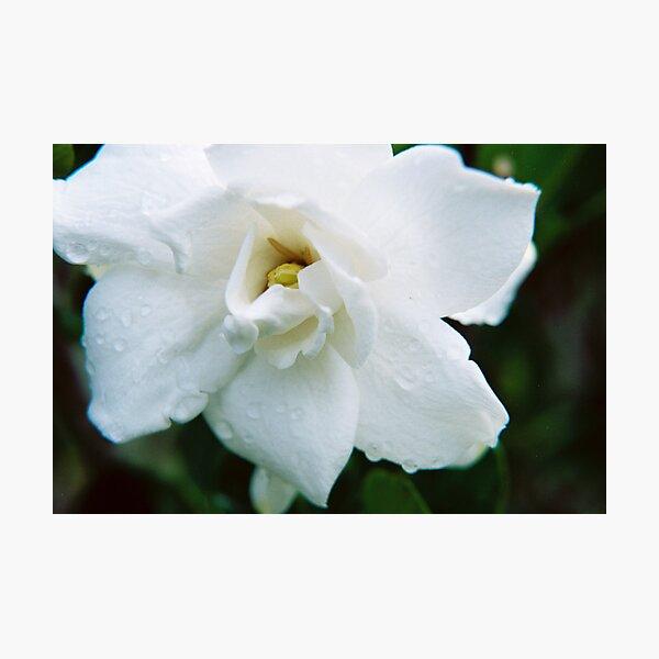 Dew Drops In The Flower Garden Photographic Print