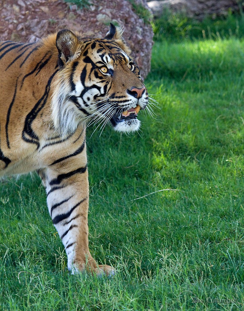 On the Prowl by Sue  Cullumber