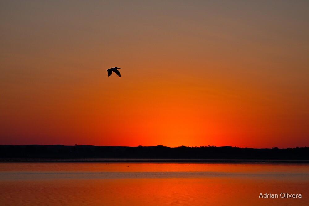 Calamus Sunset by Adrian Olivera