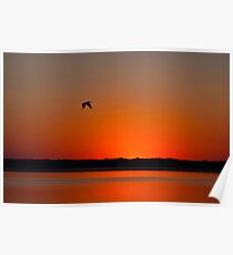 Calamus Sunset Poster