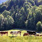 Germany, Countryside, by Daidalos