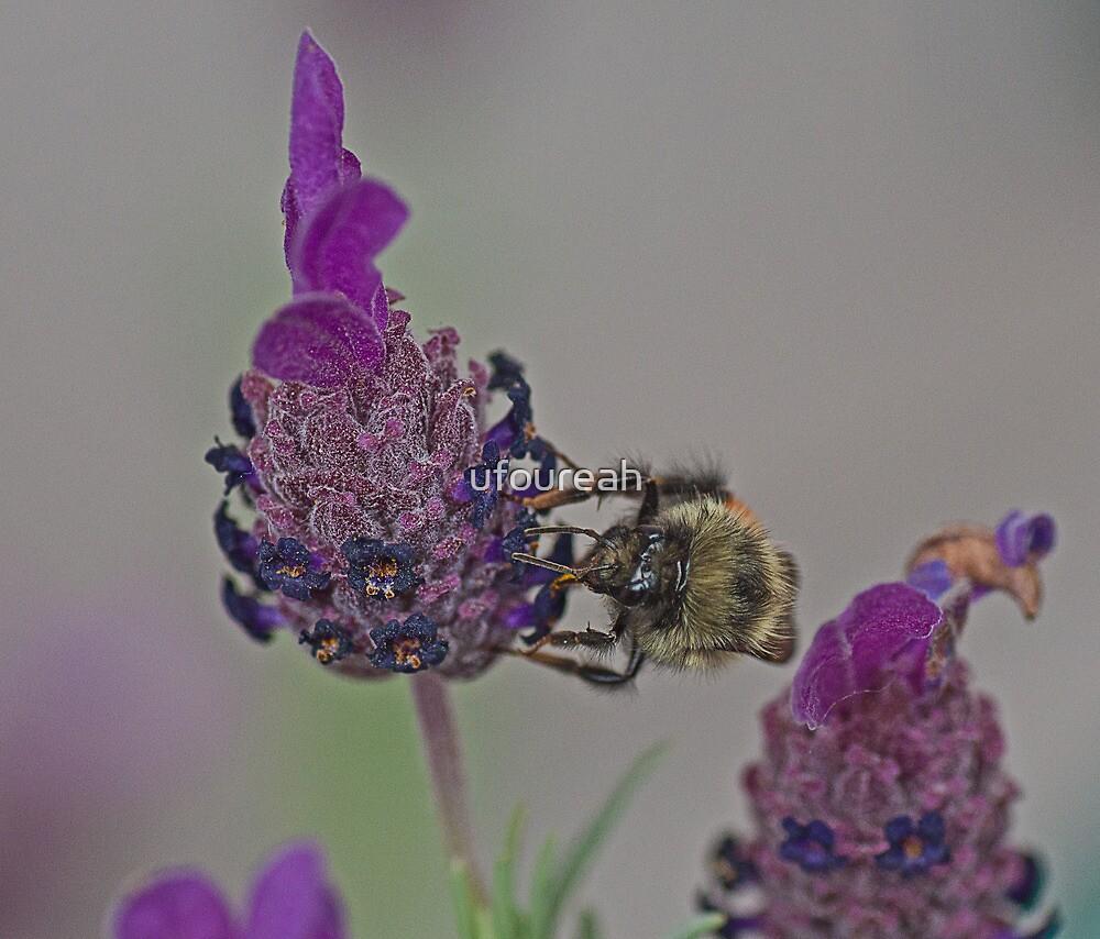 Bee at work by ufoureah