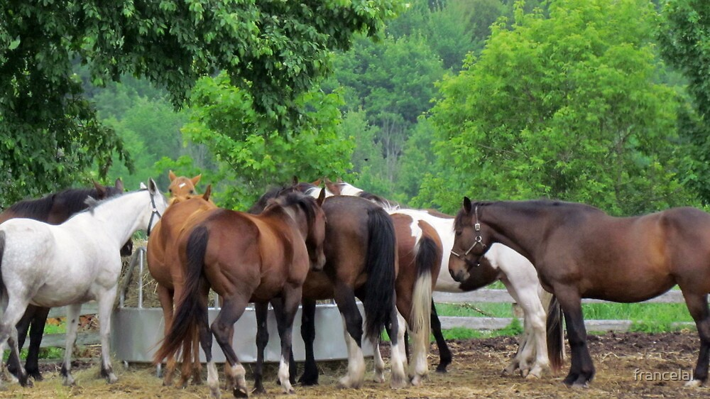 Ranch Horses by francelal
