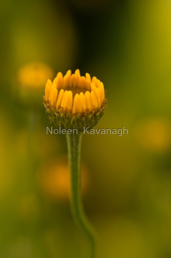 Nature is just wonderful! by Noleen  Kavanagh