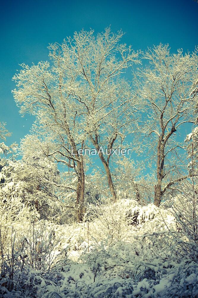 Winter Trees by LenaAuxier