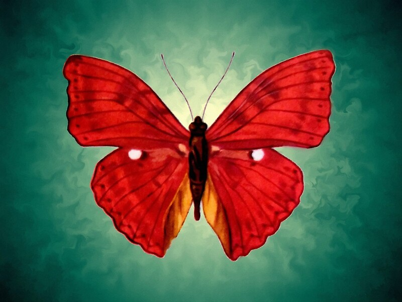 """""""red Butterfly acrylic painting"""" by goldyparazi 