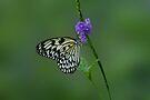 White Butterfly on Flower by Sandy Keeton