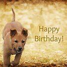 Happy Birthday by DebbieCHayes