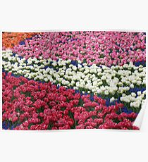 Tulips Galore! Keukenhof Gardens Poster