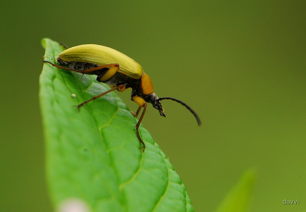 beetle ready to fly by davvi