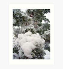Snow - in your face Art Print