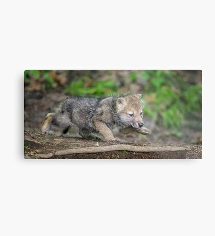Learning to Stalk Metal Print