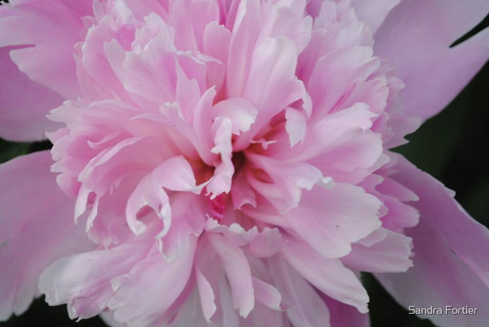 Between Spring & Summer by Sandra Fortier