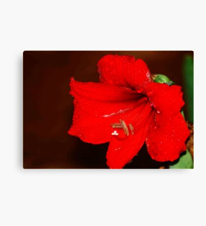 REFRESHED AMARILLA Canvas Print