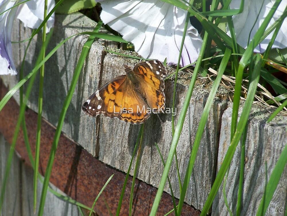 Butterfly 2! by Lisa MacKay
