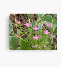 Tiny Pink Wildflowers Leinwanddruck