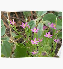 Tiny Pink Wildflowers Poster