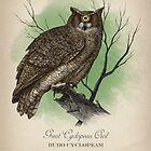 Great Cyclopean Owl by Howard Dale