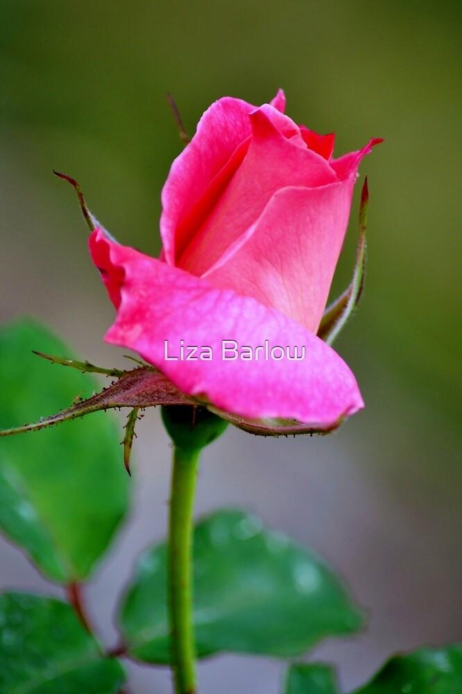 Flower 17 ♥ Pink Rose ♥ by Liza Barlow