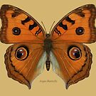 Argus Butterfly by Walter Colvin