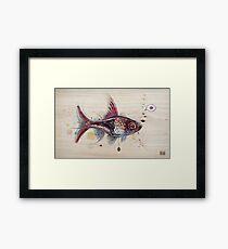 Harlequin Rasbora Framed Print