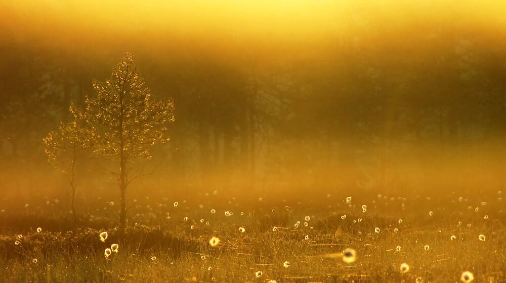 9.6.2012: Summer Morning Magic III by Petri Volanen