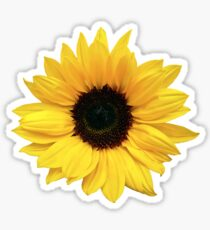 sunflower flower floral yellow brown Sticker