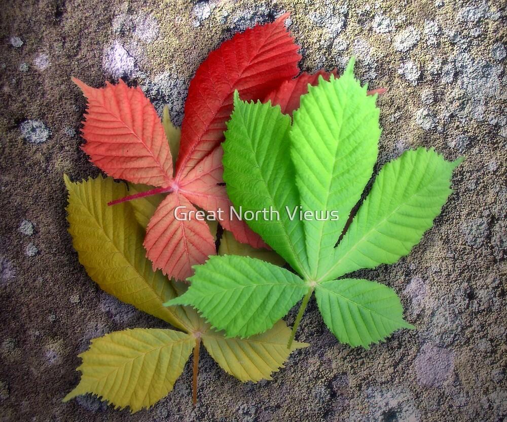 Seasoned Leaves by Great North Views