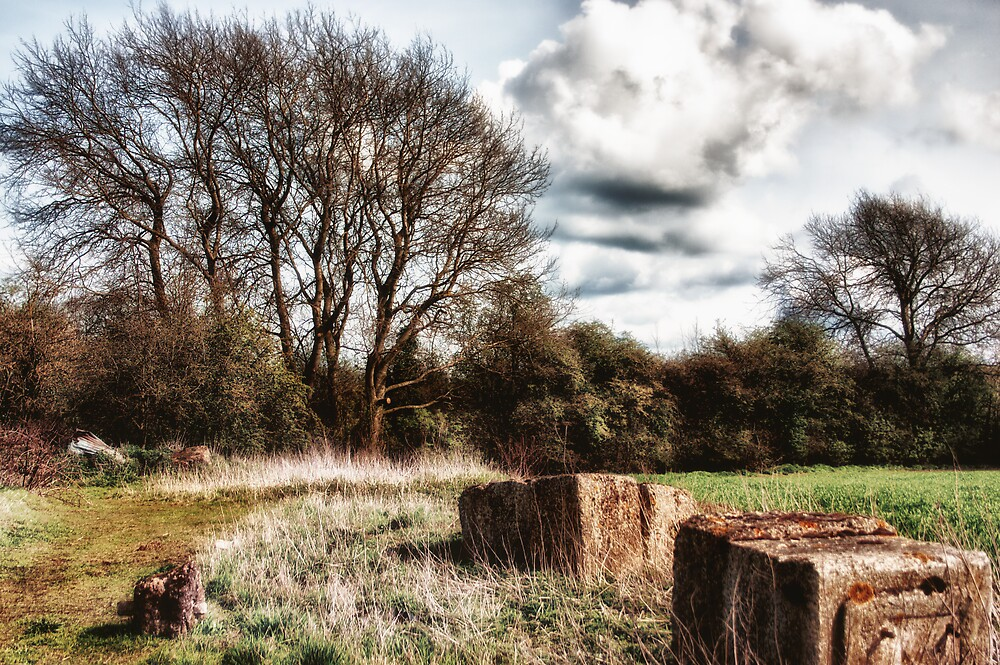 Rural Views - Autumn by Vicki Field