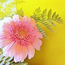 Yellow wall - pink gerbera by bubblehex08