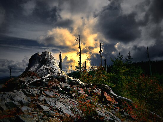 We All Have Our Time by Charles & Patricia   Harkins ~ Picture Oregon