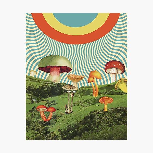 Shroomscape Photographic Print