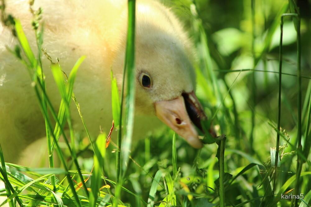 Greedy Duckling by karina5