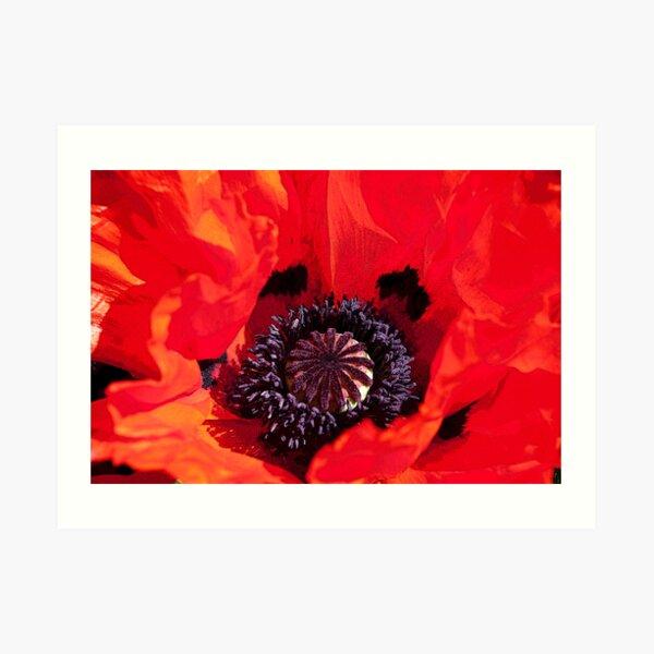 Poppy Blast Art Print
