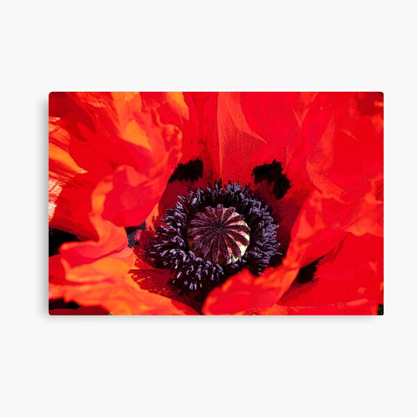 Poppy Blast Canvas Print