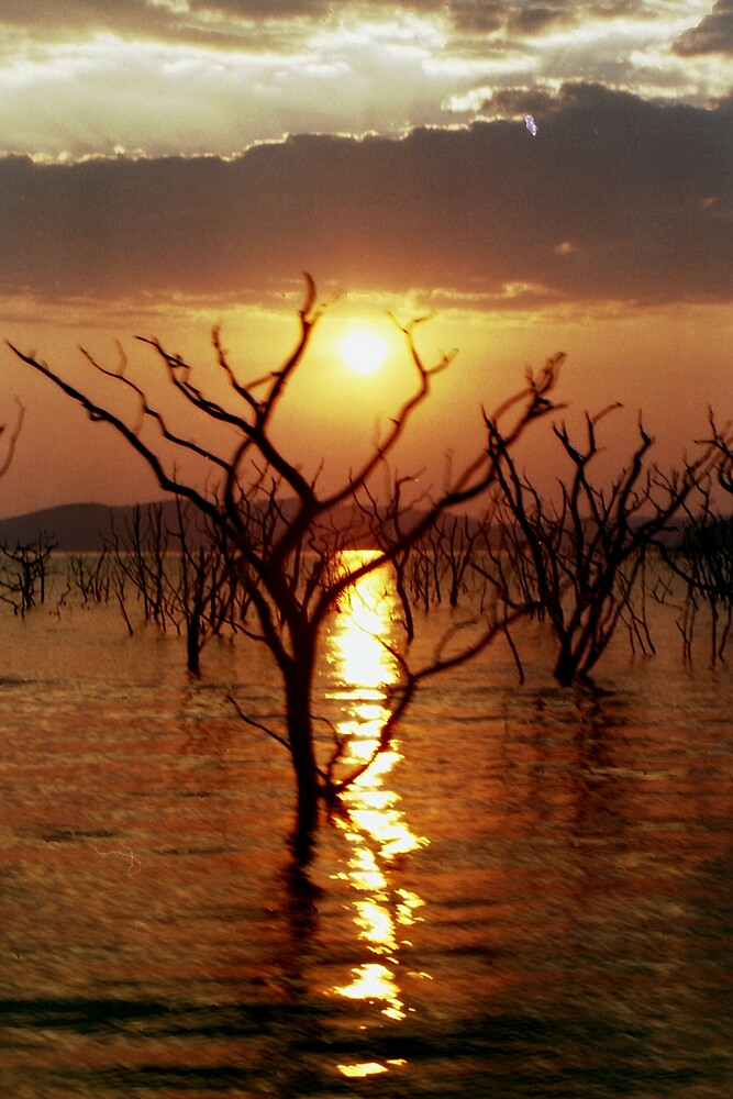 Kariba Sunset in the Trees by Jeremy Hayden