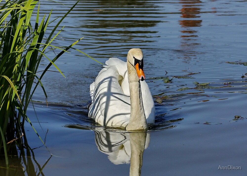 Swan on the Lake by AnnDixon