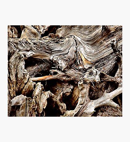 Tangleroot Photographic Print