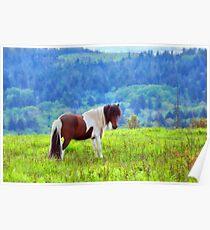 Stallion on the Hillside  Poster