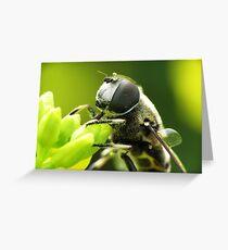 Bee Mimic 1  Greeting Card