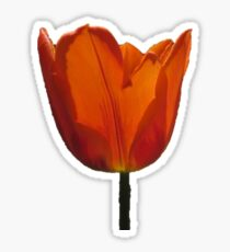 tuliply Sticker