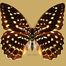 Speckled Hen Butterfly by Walter Colvin