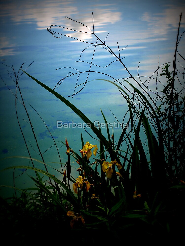 Reflection of Heaven by Barbara Gerstner