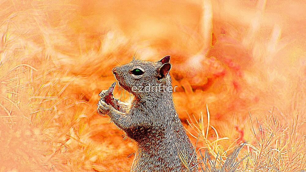squirrel in la jolla by ezdrifter