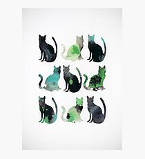 Nine Cats Photographic Print