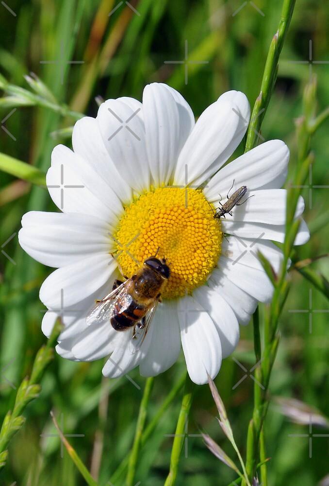 Daisy Bee by ApeArt